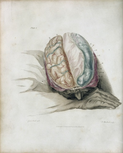 Library Insights: Surgery & Emotions